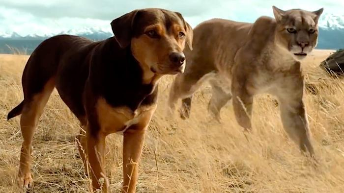 1250169858-dog-way-home-official-trailer_hires