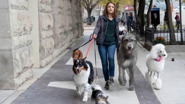 a-dogs-journey.jpg